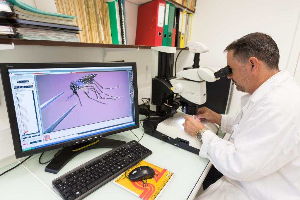 Chercheur observant un moustique à la loupe binoculaire
