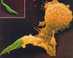 Réunion scientifique sur le thème du Leishmania RNA virus
