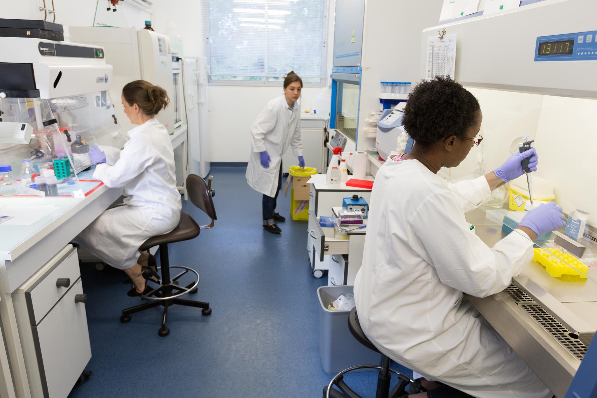 Pièce culture cellulaire du laboratoire de parasitologie