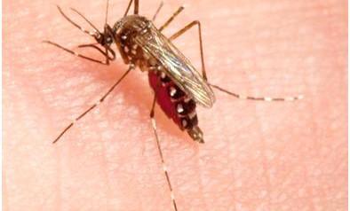 Combattre la résistance des moustiques aux insecticides