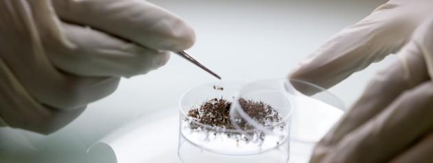 L'Institut Pasteur recrute Un(e) technicien(ne) de laboratoire