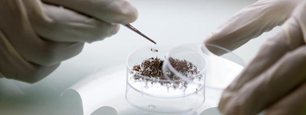 L'Institut Pasteur organise le premier cours en entomologie médicale en Guyane