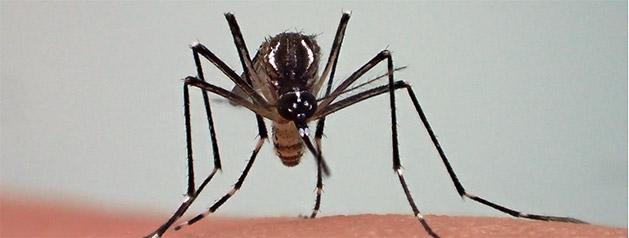 Des chercheurs décrivent la durée de vie du virus Zika dans le sperme des patients en Guyane