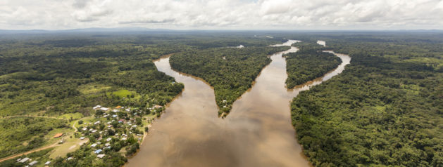 Circulation du virus émergent Mayaro en Amazonie Française